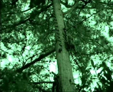 mad'arbre1